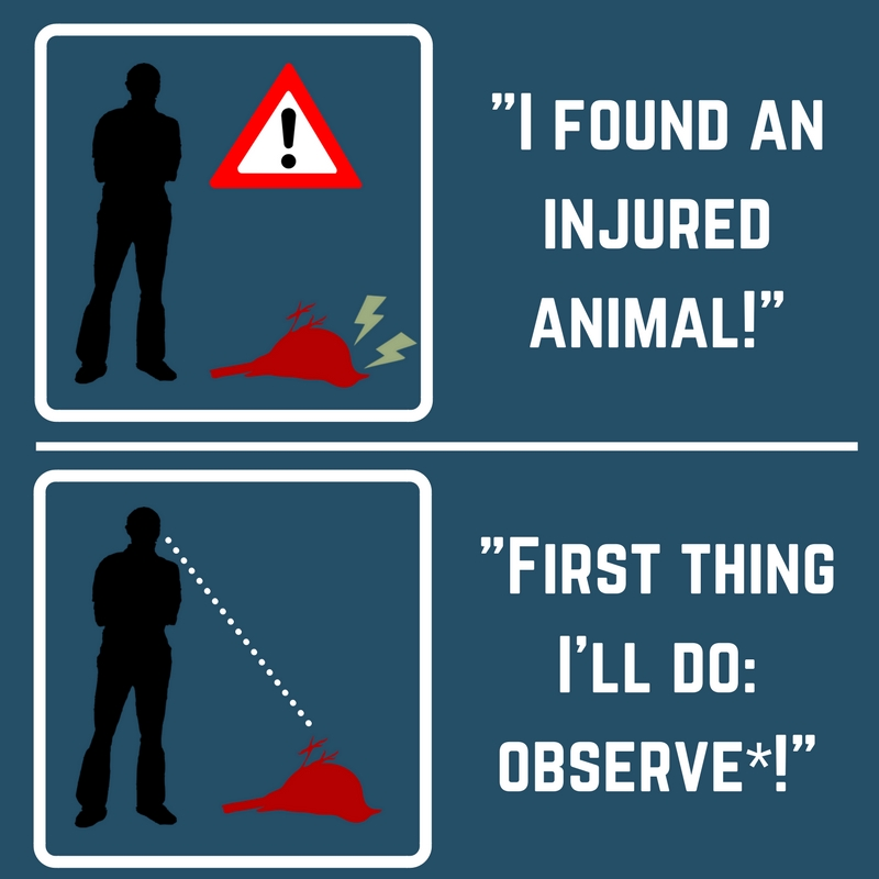 Found Injured Animal